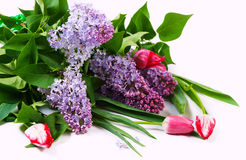 Bouquet with lilac and tulips Stock Image