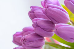 Lilac tulips . A bouquet of tulips and lilac color Stock Photos