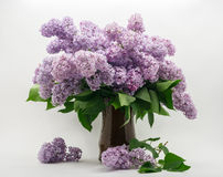 Bouquet of lilac on a white background. Bouquet of lilacs in brown clay jug on a white background Stock Photo