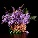 A bouquet of lilac in a wicker basket on a black background. Royalty Free Stock Images