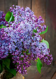 Bouquet of lilac Stock Photos
