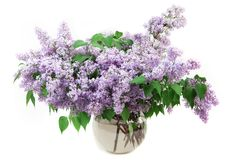 Bouquet of lilacs Royalty Free Stock Photo