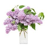 Bouquet of lilacs Stock Photo