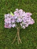 Bouquet lilas Image libre de droits