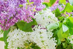 Bouquet lilas dans le vase Photos libres de droits