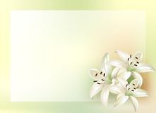 Bouquet of lilies. With place for your text Royalty Free Stock Photography