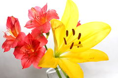Bouquet of Lilies. Bouquet of assorted lilies in a vase Royalty Free Stock Images