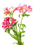 Bouquet of lilies (alstroemeria) Royalty Free Stock Photos