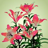 Bouquet from lilies Royalty Free Stock Images