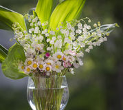 Bouquet of lilies and daisies Stock Images