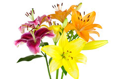 Bouquet of lilies Royalty Free Stock Photo