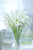 A bouquet of lilies of the valley Stock Image