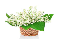 Bouquet of lilies of the valley in basket Stock Image