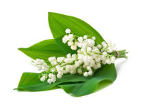 Bouquet of lilies of the valley. Isolated on white background Stock Images