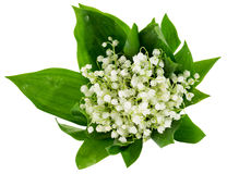 Bouquet of lilies of the valley isolated on the white background Stock Image