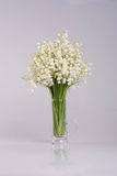 Bouquet of lilies of the valley on white background Stock Images