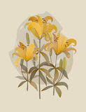 Bouquet of lilies. Vector illustration.  Bouquet of yellow lilies. isolated on white Royalty Free Stock Images