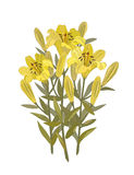 Bouquet of lilies. Vector illustration.  Bouquet of yellow lilies. isolated on white Stock Images