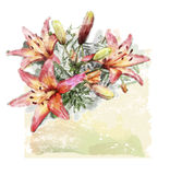 Bouquet of lilies. Watercolor illustration of bouquet of lilies Stock Images