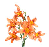 Bouquet of lilies Stock Photo