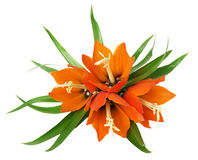 Bouquet of lilies on white background Royalty Free Stock Photography