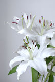 Bouquet of lilies on a white background. Beautiful bouquet of lilies on a white background royalty free stock photography