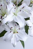 Bouquet of lilies on a white background. Beautiful bouquet of lilies on a white background Royalty Free Stock Images