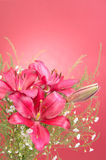Bouquet of Lily Flowers royalty free stock photo