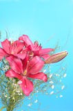 Bouquet of Lily Flowers. Against cyan background Stock Images