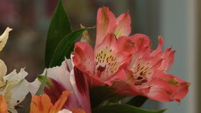 Bouquet of lily flowers stock video