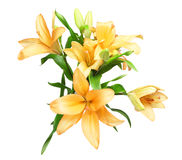 Bouquet of lily. Pictured a bouquet of lily in a white background Royalty Free Stock Image