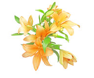 Bouquet of lily. Pictured a bouquet of lily in a white background Stock Photo