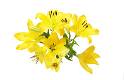 Bouquet of lily. Pictured a bouquet of lily in a white background Royalty Free Stock Photos
