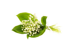 Bouquet of lily of the valley Royalty Free Stock Photos