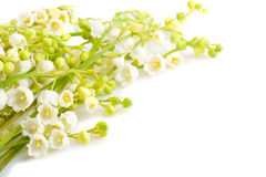 Bouquet lily of the valley Stock Photography