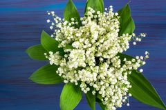 Bouquet of lily of the valley on blue background. Delicate bouquet of lily of the valley convallaria majalis on blue background. Spring flowers: symbol of Royalty Free Stock Images