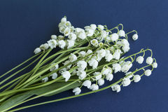 Bouquet Lily of the Valley. On a Dark Blue Background Royalty Free Stock Images