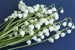 Bouquet Lily of the Valley. On a Dark Blue Background Stock Photography