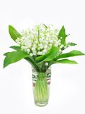 Bouquet of lily of the valley flowers. In vase Royalty Free Stock Photography