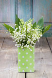Bouquet of lily of the valley flowers in green dotted can. Festive and party decoration Royalty Free Stock Photography