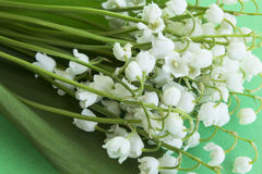 Bouquet Lily of the Valley. On a Green Background Stock Photography