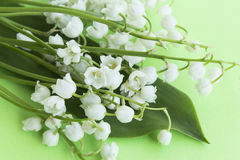 Bouquet Lily of the Valley. On a Green Background Royalty Free Stock Photos