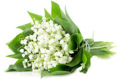 Bouquet of lily of the valley isolated on the white background Stock Images