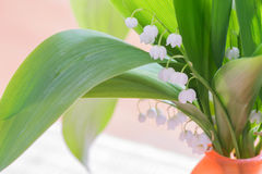 Bouquet of lily of the Valley Stock Photos
