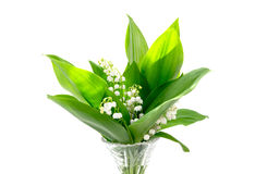 Bouquet of lily of the valley in a vase Stock Images
