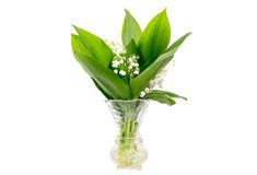 Bouquet of lily of the valley in a vase Royalty Free Stock Images