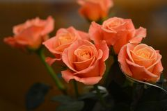 Bouquet of live orange-pink roses close-up. Bouquet of live orange-pink roses close-up, floral background Royalty Free Stock Photo