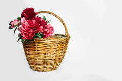 Bouquet of living coral and pink  peonies stock images