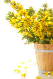 Bouquet with loosestrife in wooden bucket Royalty Free Stock Images