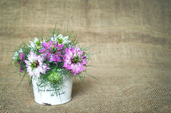 Bouquet of a love in the mist flowers. On canvas Royalty Free Stock Images